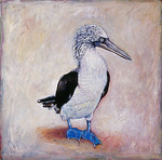 Blue-footed Boobie by Elli Crocker Ms.