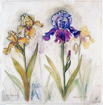 Irises by Elli Crocker Ms.